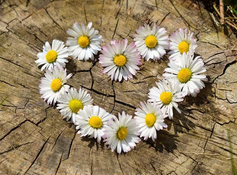 Escuela del Amor: Curso de Primavera