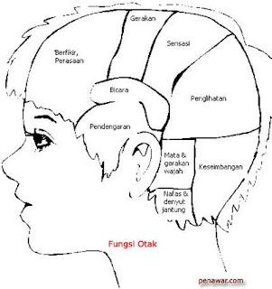 Pengaruh zikir terhadap otak manusia