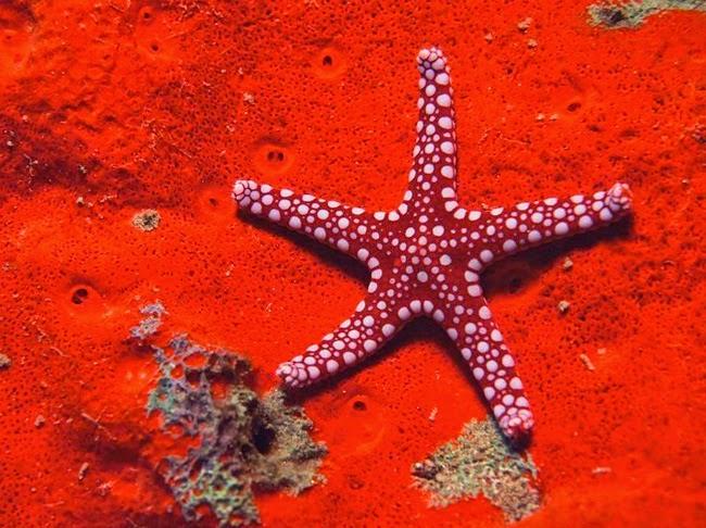 أجمل الأسماك الاستوائية الملونة   - صفحة 4 Colorful-tropical-fishes-35