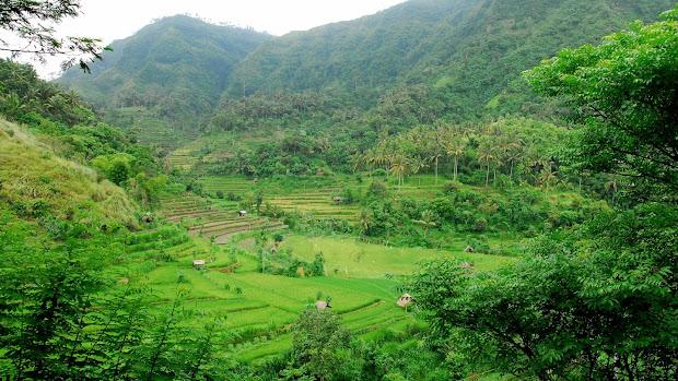 balinese traditional irrigation