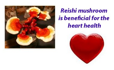 Reishi mushrooms benefits 4
