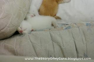 kucing lucu tidur