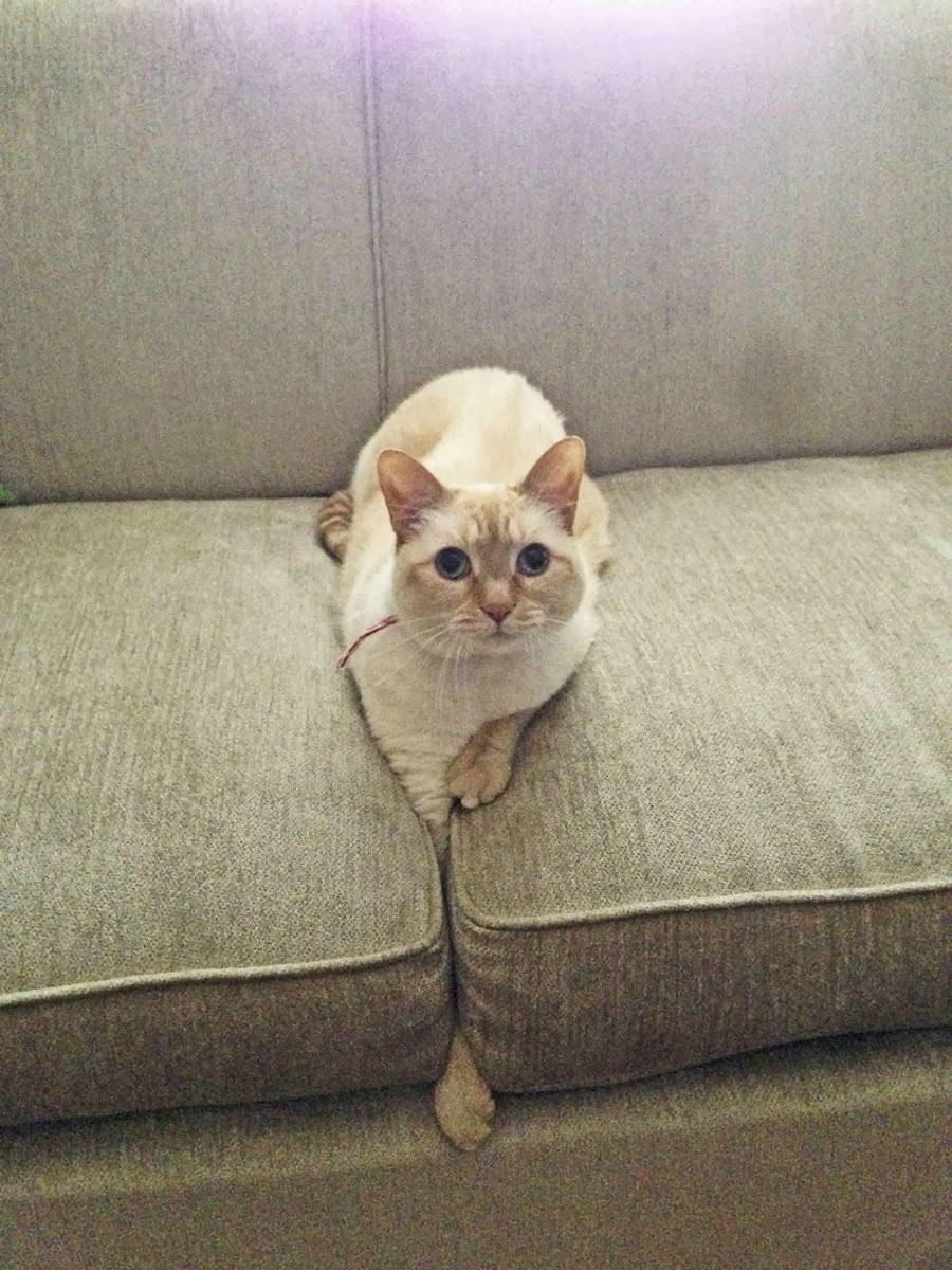 Funny cats - part 78 (35 pics + 10 gifs), cat pics, cat stuck his hand on couch