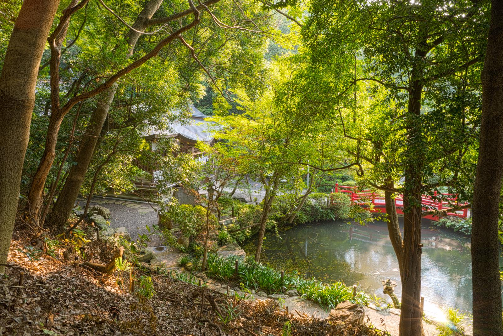 はけ上から見た貫井神社の写真