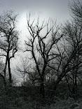 A Scene from Winter Walking