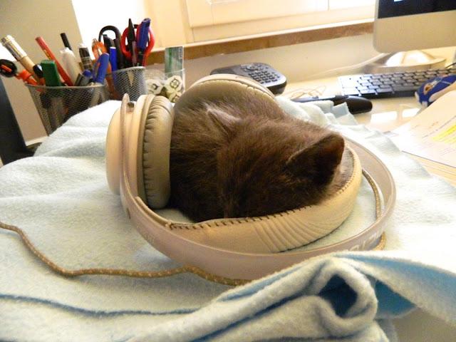 funny cat pictures, kitten sleeps
