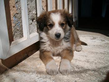 Μy dog Thiseas Θησεας