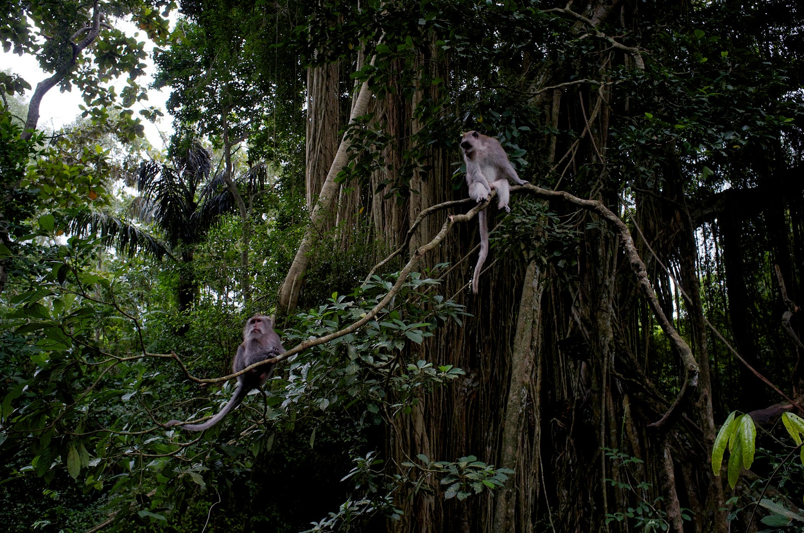 Bali Attractions: Ubud Monkey Forest3