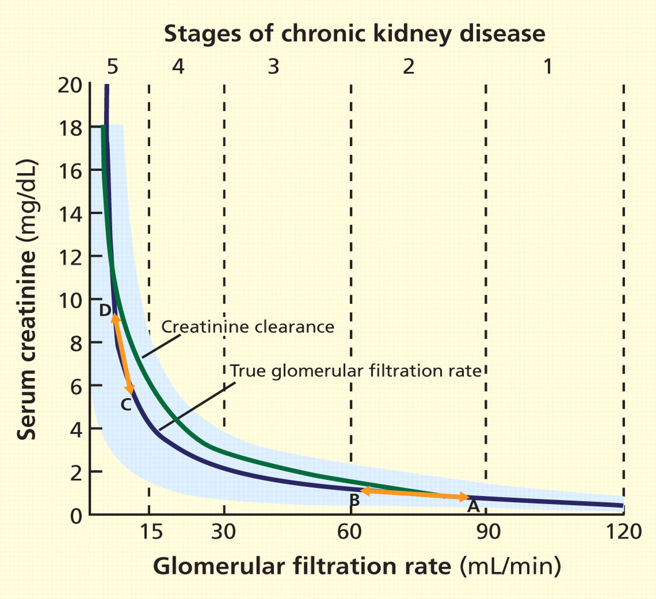 Gfr levels in older adults