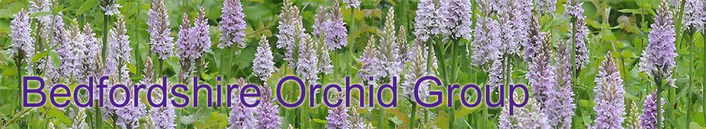 <br><br> Bedfordshire Orchid Group