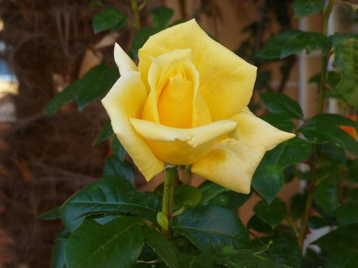 Te regalo una rosa - Página 5 5e0606b3e04d72402dab979cf5f2c3ad