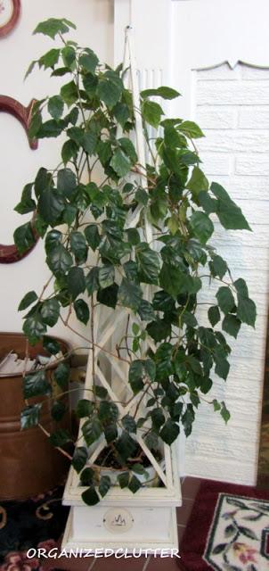 Grape Ivy Topiary