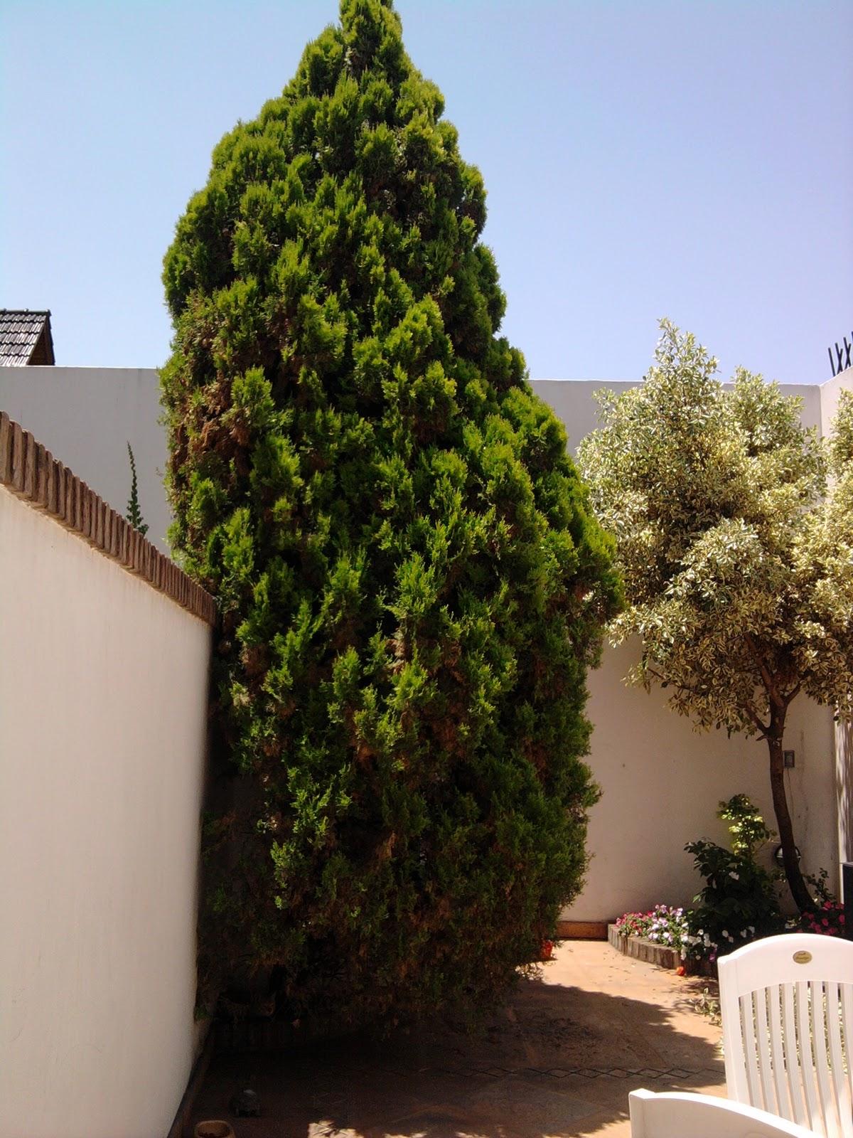 T cnico en jardiner a podas de formaci n y podas sanitaria for Tecnico en jardineria