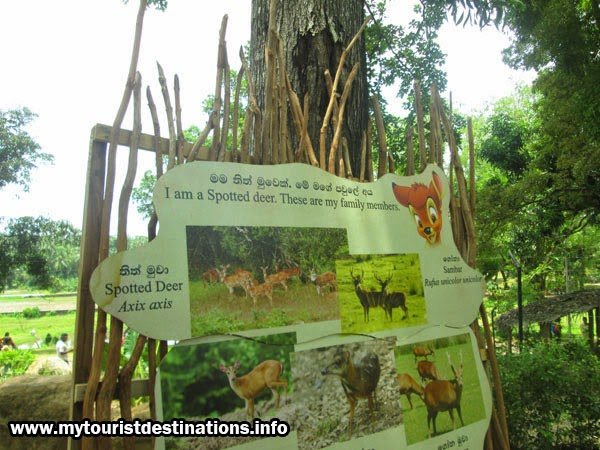 zoological garden pinnawala