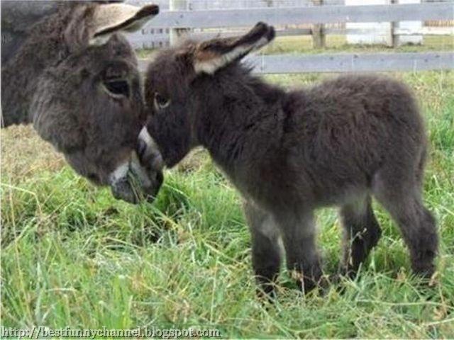 Cute Donkey.