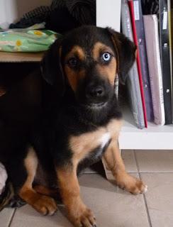 Βρέθηκε παρατημένος στην Άνω Τούμπα ο σκύλος της φωτογραφίας και χαρίζεται! Είναι περίπου 3 μηνών, θα αποπαρασιτωθεί και θα εμβολιαστεί. Ποιος θα τον υιοθετήσει?