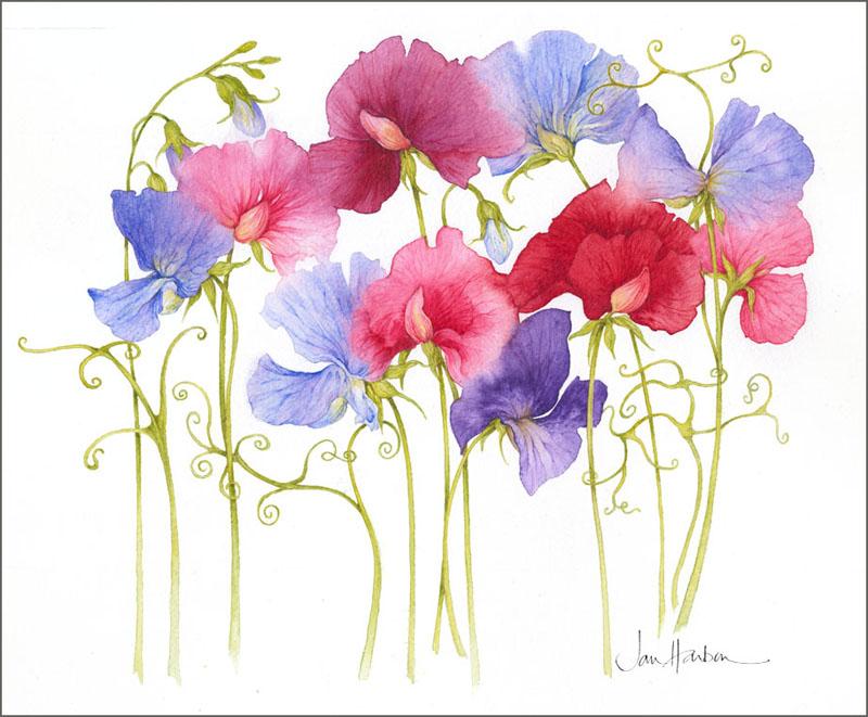 Полевые цветы акварелью.