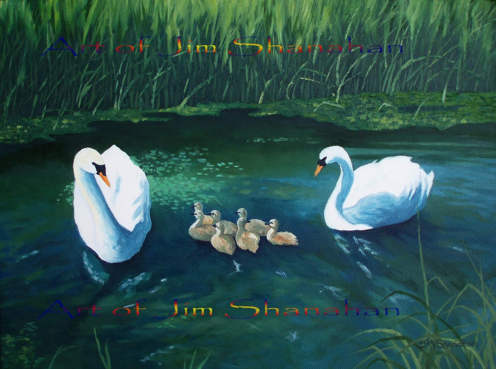 Swans and Cygnets -- For Sale Euro 480