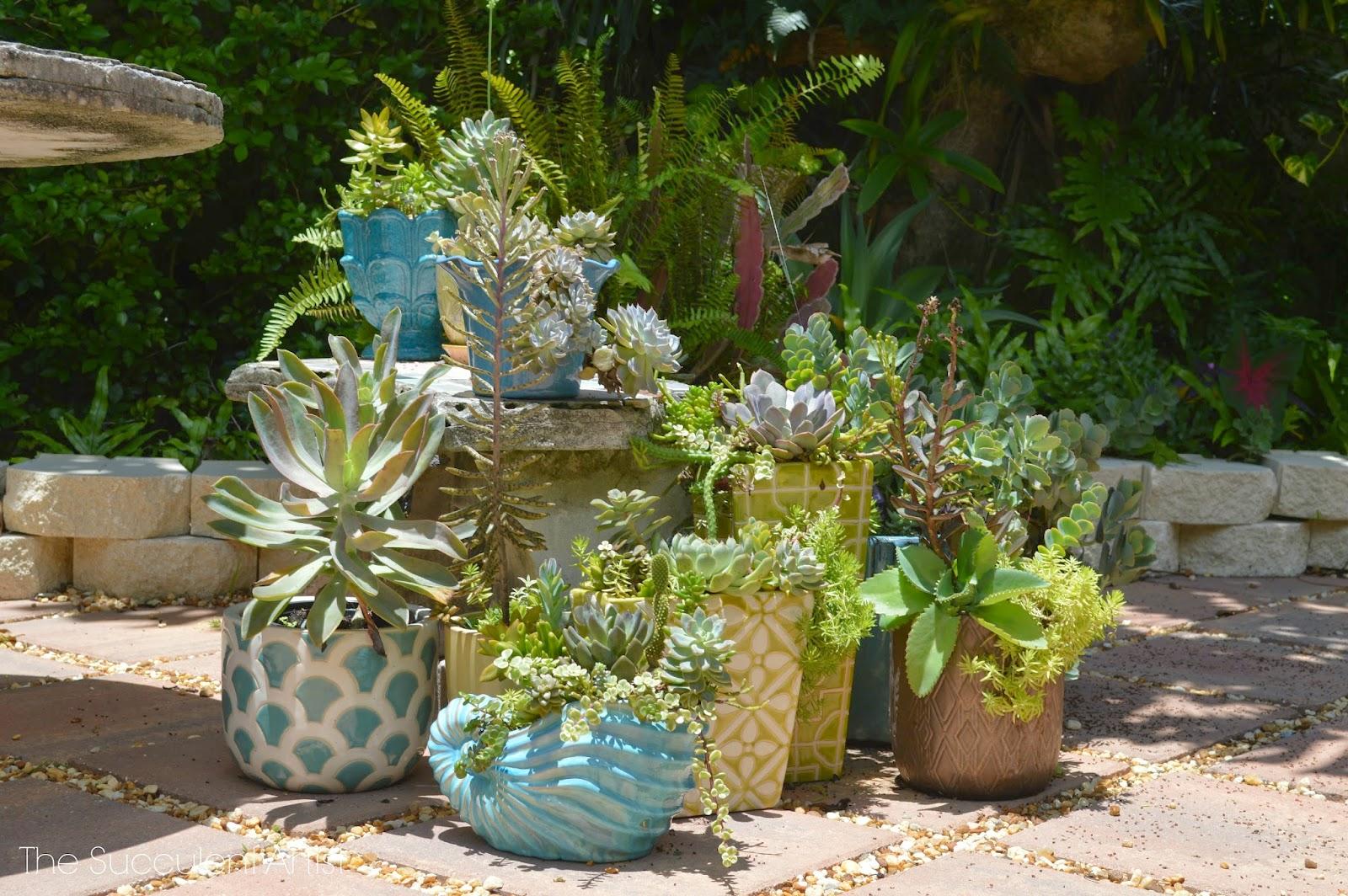The succulent artist unique succulent and cacti planters Planters for succulents