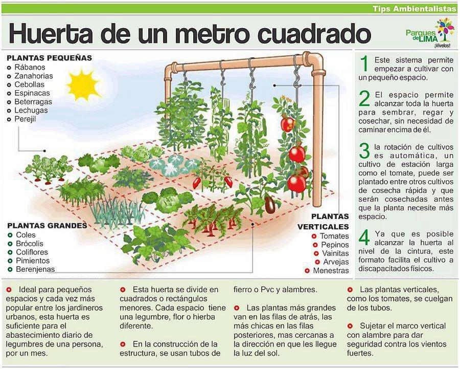 Grupo reciclaje manuel garvayo huerto de andar por casa - Huerto en la terraza ...