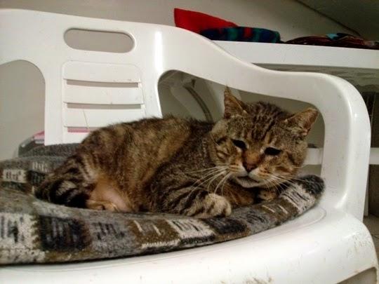 Torre Argentina Cat Shelter