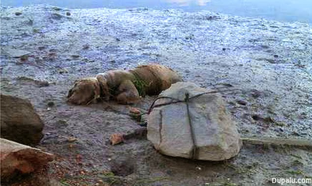Perro asesinado por su dueño atándolo a una piedra junto al mar en Huelva