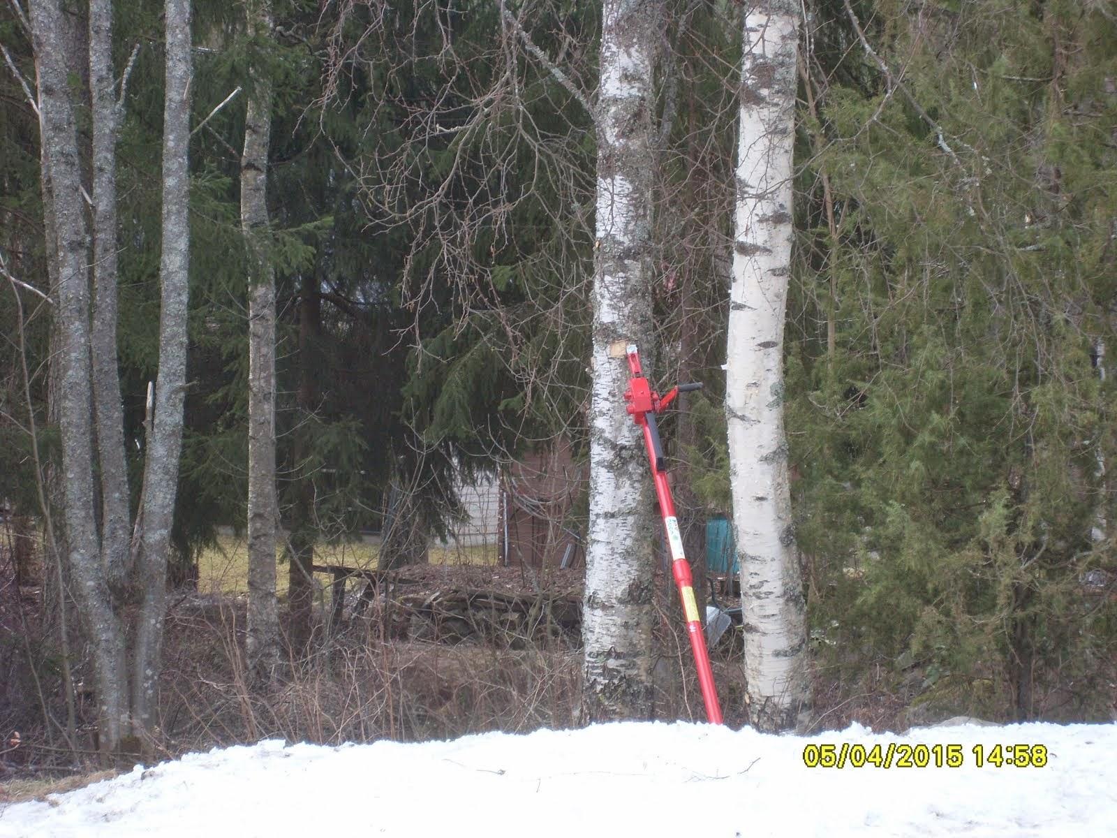 Pihakoivujen kaadot Tampere Ylöjärvi Nokia Pirkanmaa kaadonsuuntaaja Stalpenin avulla