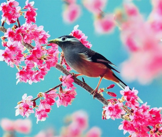 Colorful bird and pink flowers colorful background wallpapers colorful bird and pink flowers colorful background wallpapers here you can see colorful bird and pink flowers colorful background wallpapers or download mightylinksfo