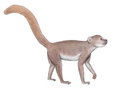 primates extintos de Madagascar Archaeolemur