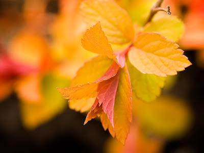 Colección de plantas, flores y frutas (12 imágenes closup)