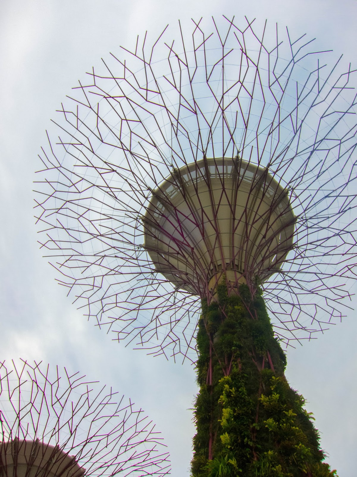 Supertree Grove, Gardens by the Bay in Singapore | Svelte Salivations - Travel