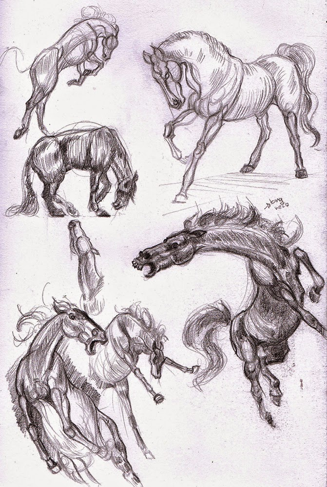 Hamo\'s Art Blog: Horse anatomy sketches
