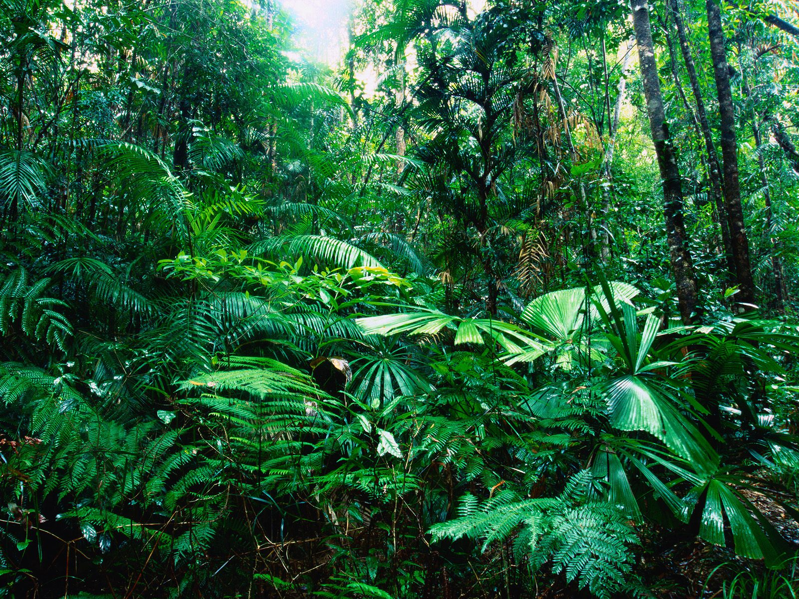 6 5 13 tropicalism and national recociliation abc for Australian rainforest