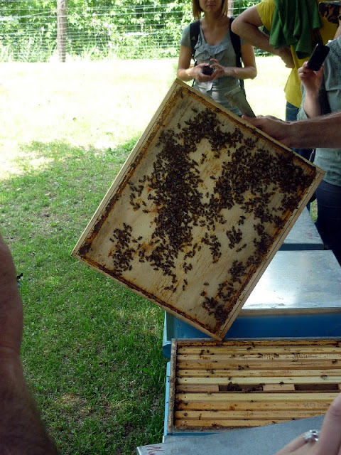 apicoltura belfort paganella