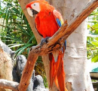 bird park gili meno