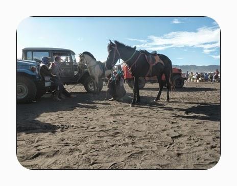 Penyedia Jasa Naik Kuda ke Gunung Bromo