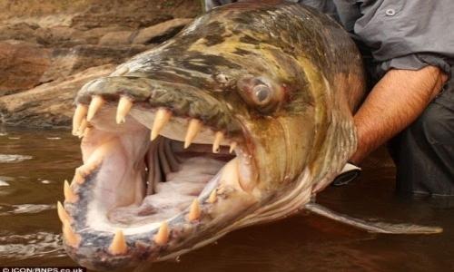 επικύνδυνο ψάρι