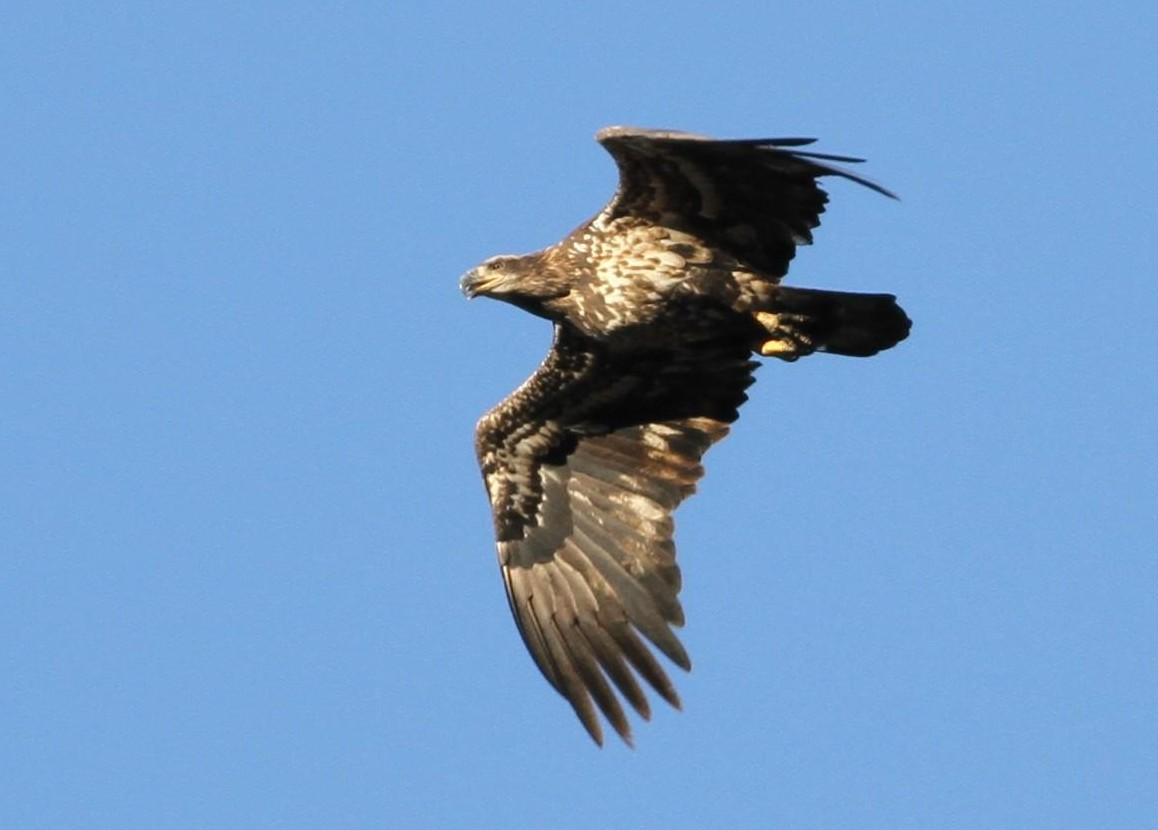 As I Watch The Eagles Soar And Fly Away Something Enters My Camera Frame Its Not A Bird Drone With
