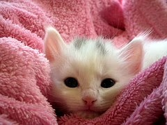 Image Of Small Kitten