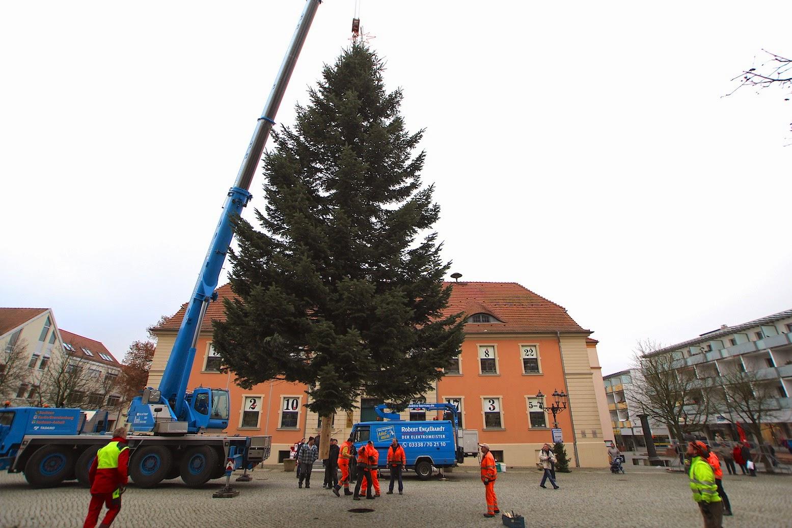 Nachtrag zum Bernauer Weihnachtsbaum: Bilder, Infos, Fakten ...