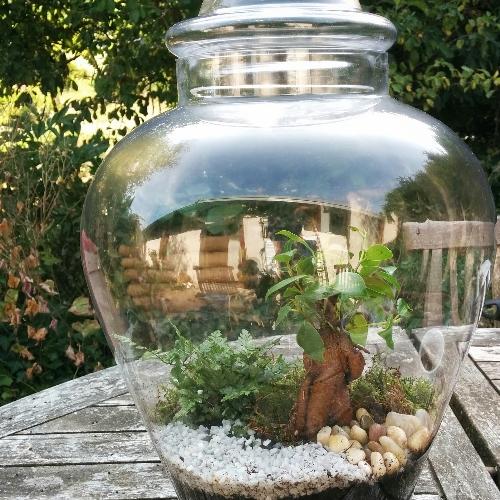 Blog non identifi c 39 est arriv pr s de chez moi 22 - Kit terrarium plante ...