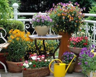 Potted Floral Garden on Patio