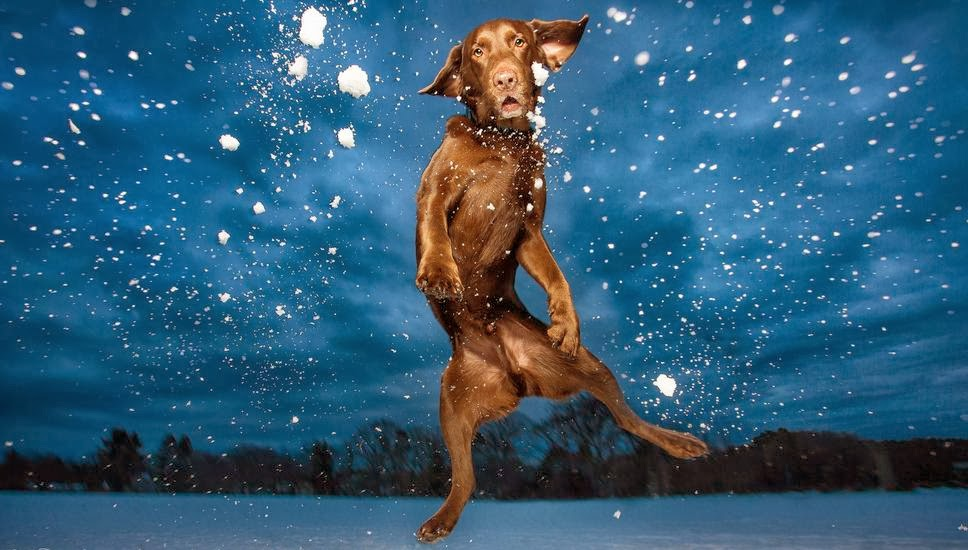 Cute dogs - part 9 (50 pics), dog jumping in the snow
