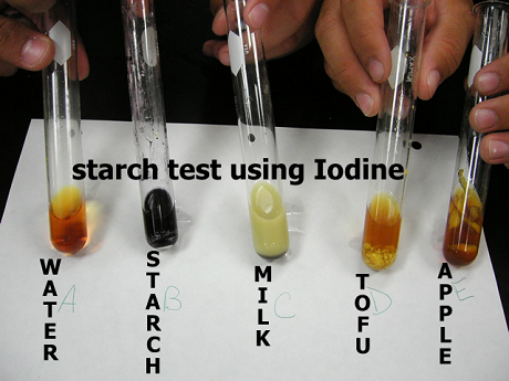 iodine test for starch Using iodine to test for the presence of starch is a common experiment a solution of iodine (i 2) and potassium iodide (ki) in water has a light orange-brown color if it is added to a sample that contains starch, such as the bread pictured above, the color changes to a deep blue but how does this.