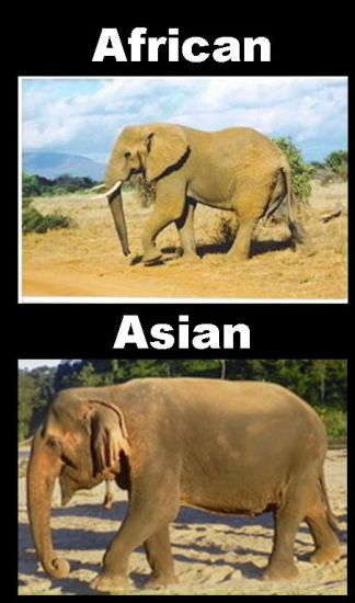 7 Fakta Unik Gajah [lensaglobe.blogspot.com]