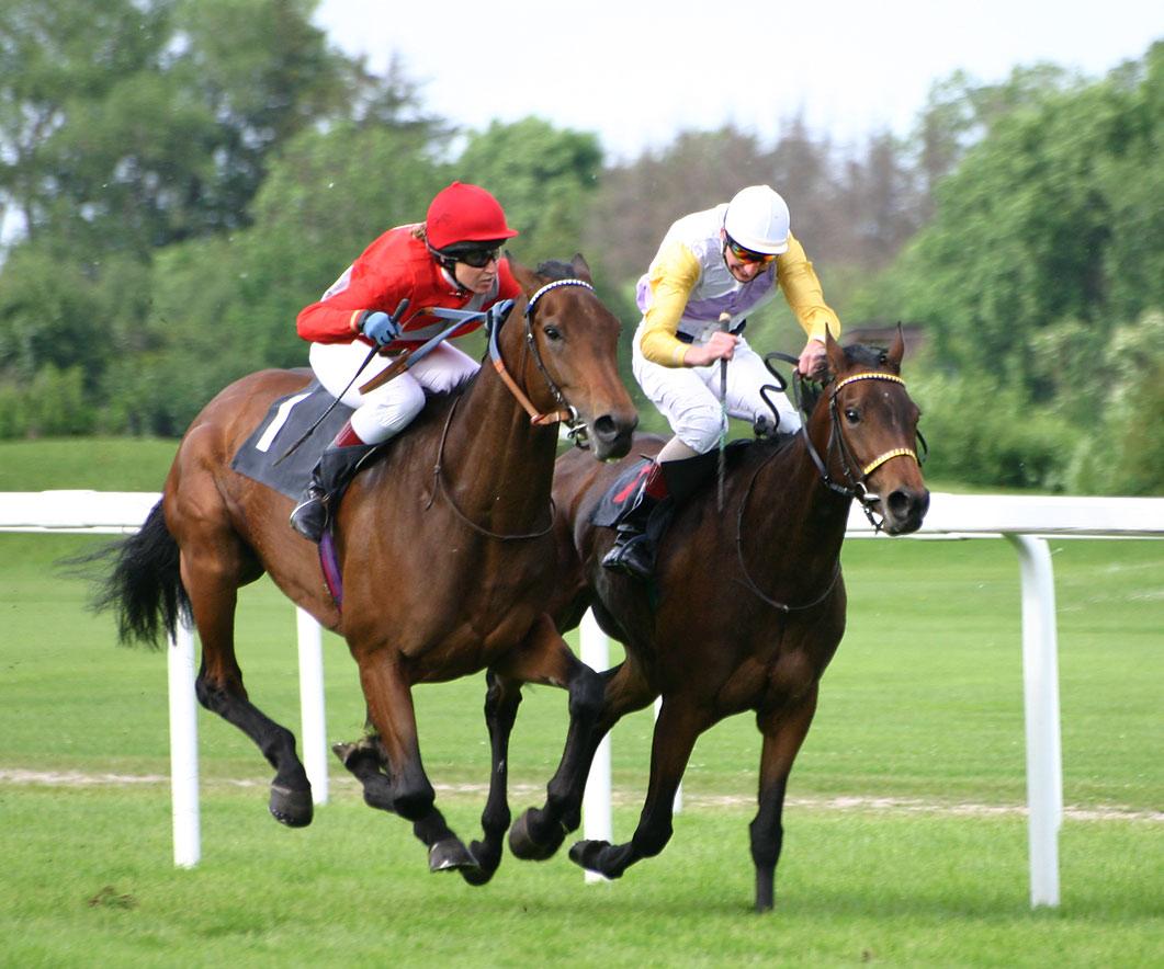 http://4.bp.blogspot.com/-RX2vw7cLUaA/UEwqwZFL5fI/AAAAAAAAGfY/GoWmKNlif9A/s1600/Horse+Racing+Speed.jpg