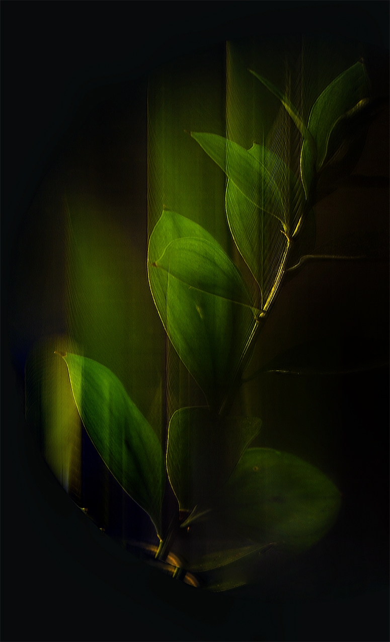 #StillLifePhotography #Photography #SimiJoisPhotography #Nature #Summer2015