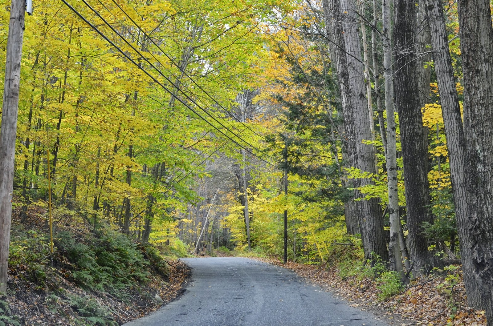 Fall, Vermont, road