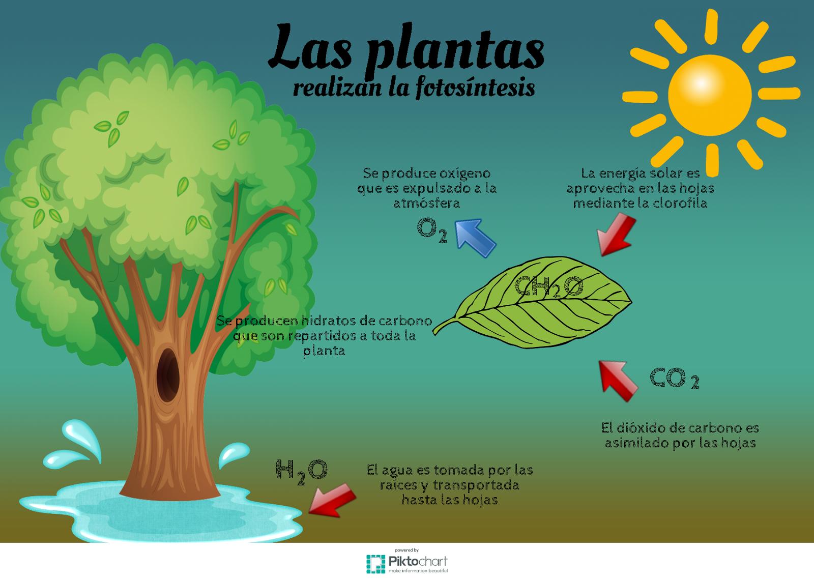 El proceso de la fotosintesis en la noche 57