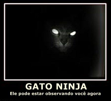 Gatos Ninjas